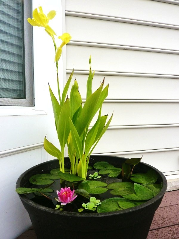 Diy Container Water Garden Whats Ur Home Story